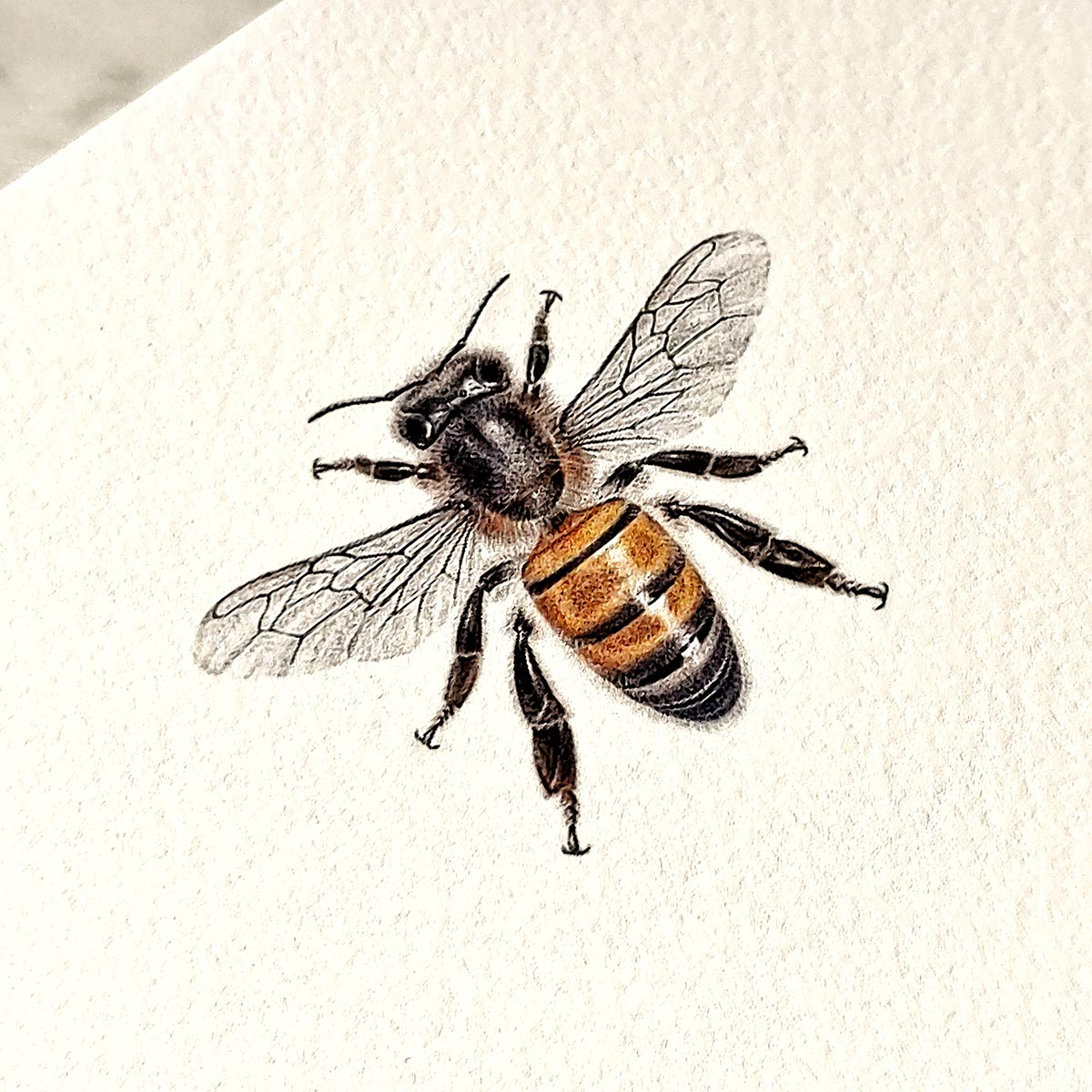 The Punctilious Mr. P's 'Bees' note cards- detail of bee