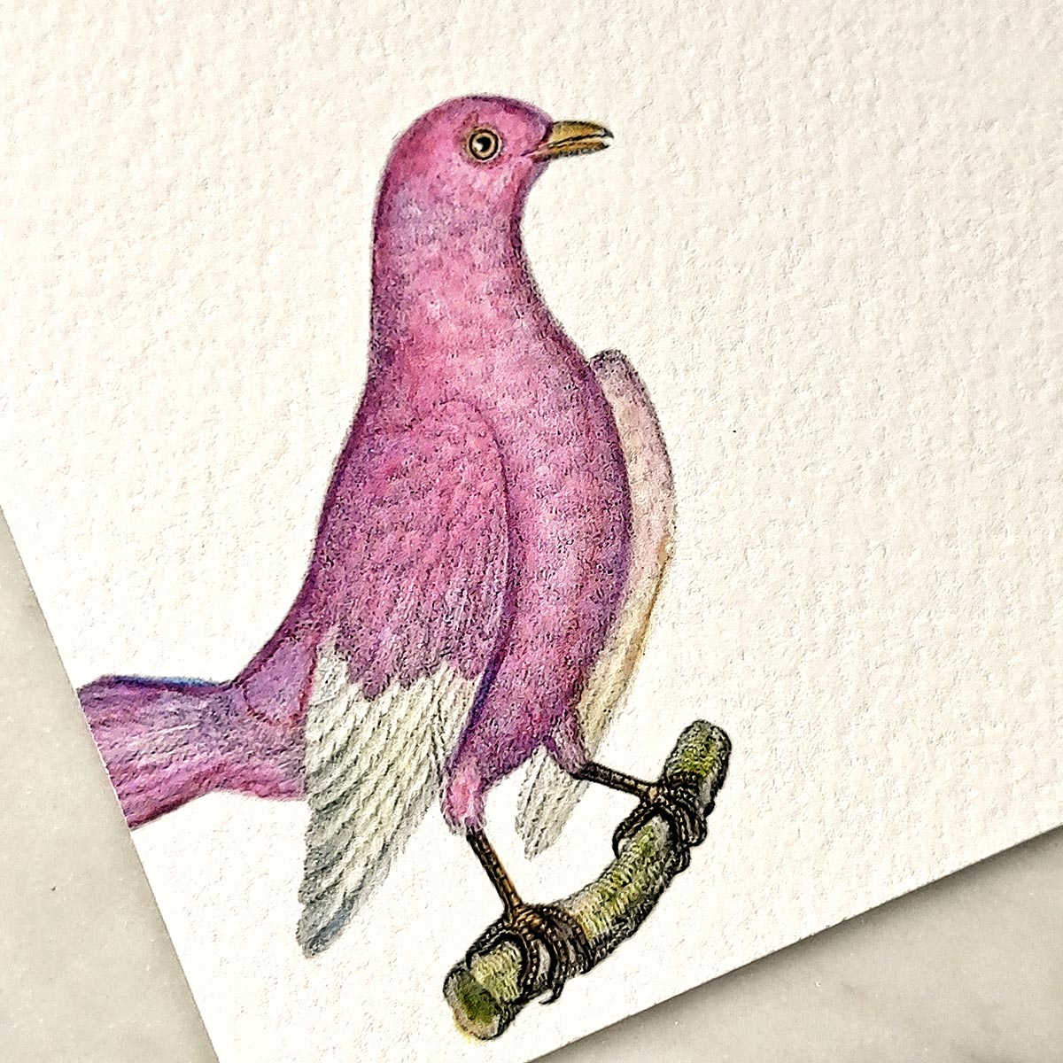 detail of The Punctilious Mr. P's 'chromatic cuckoo' personalized note card showing pink bird