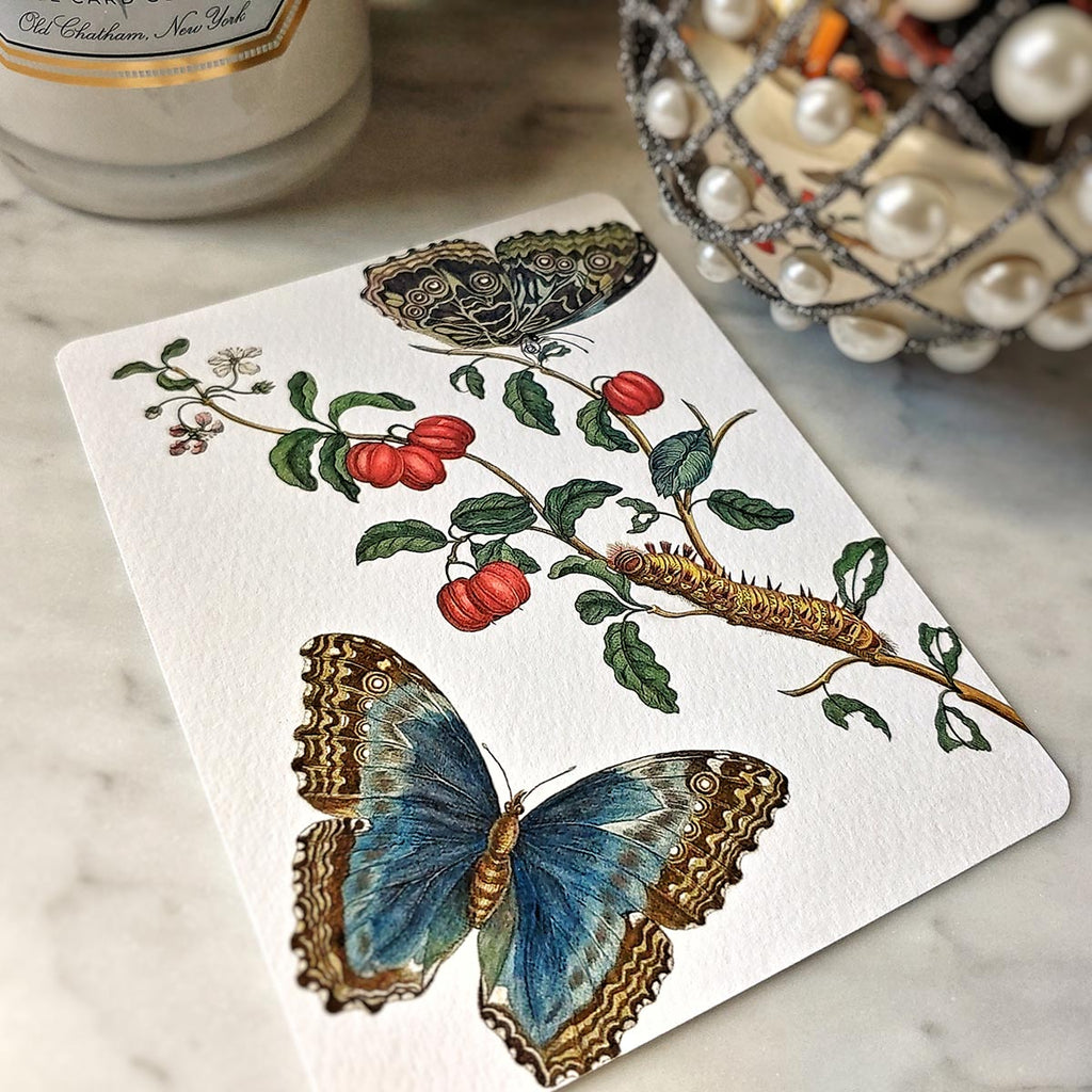 The Punctilious Mr. P's 'signs of spring' personalized note card featuring butterflies and red fruit