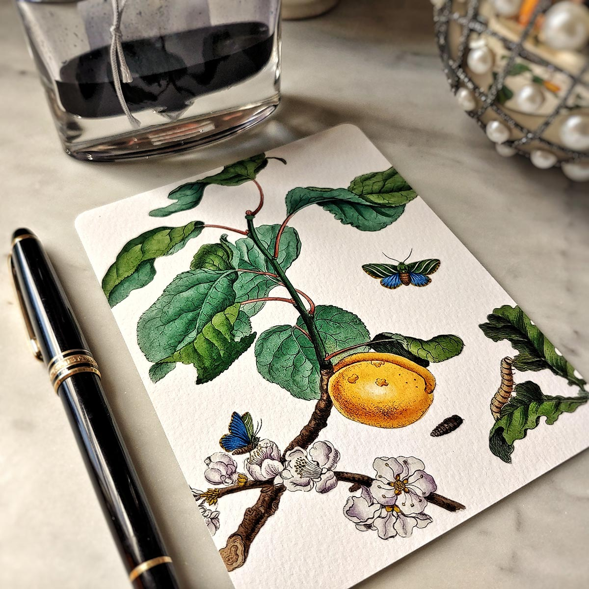 The Punctilious Mr. P's 'signs of spring' note card pack featuring butterflies and yellow fruit
