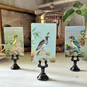 The Punctilious Mr. P's 'Birds of India' place cards