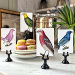 The Punctilious Mr. P's 'Chromatic Cuckoo' place cards