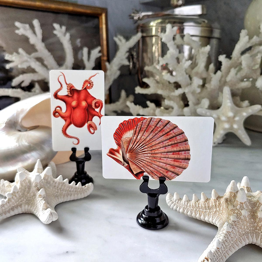 The Punctilious Mr. P's 'Fiery Mollusks' place cards