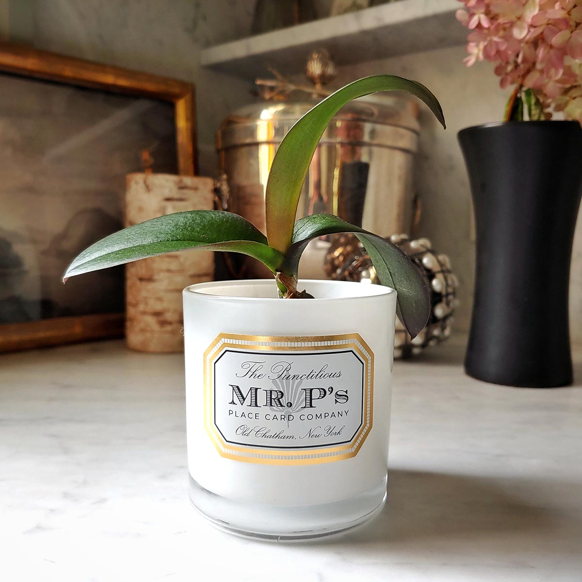 "Mr. P's ""Pax"" wellness candle jar upcycled with potted plant"