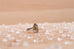 Smoky Citrine Hera ring | Sterling silver