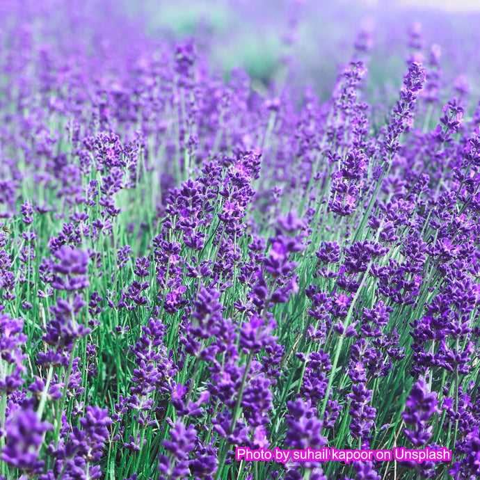What lavender and rose flowers can express?