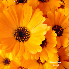 Calendula | Green Acre Scent | Botanical Skincare Products