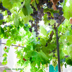 Grapevine | Green Acre Scent | Botanical Skincare Products