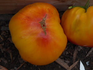 Tomatoes on Parade Awards a Gold Medal Tomato