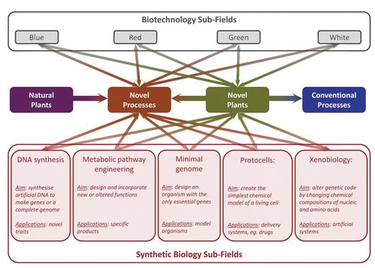 Synthetic Biology: Design for Destruction