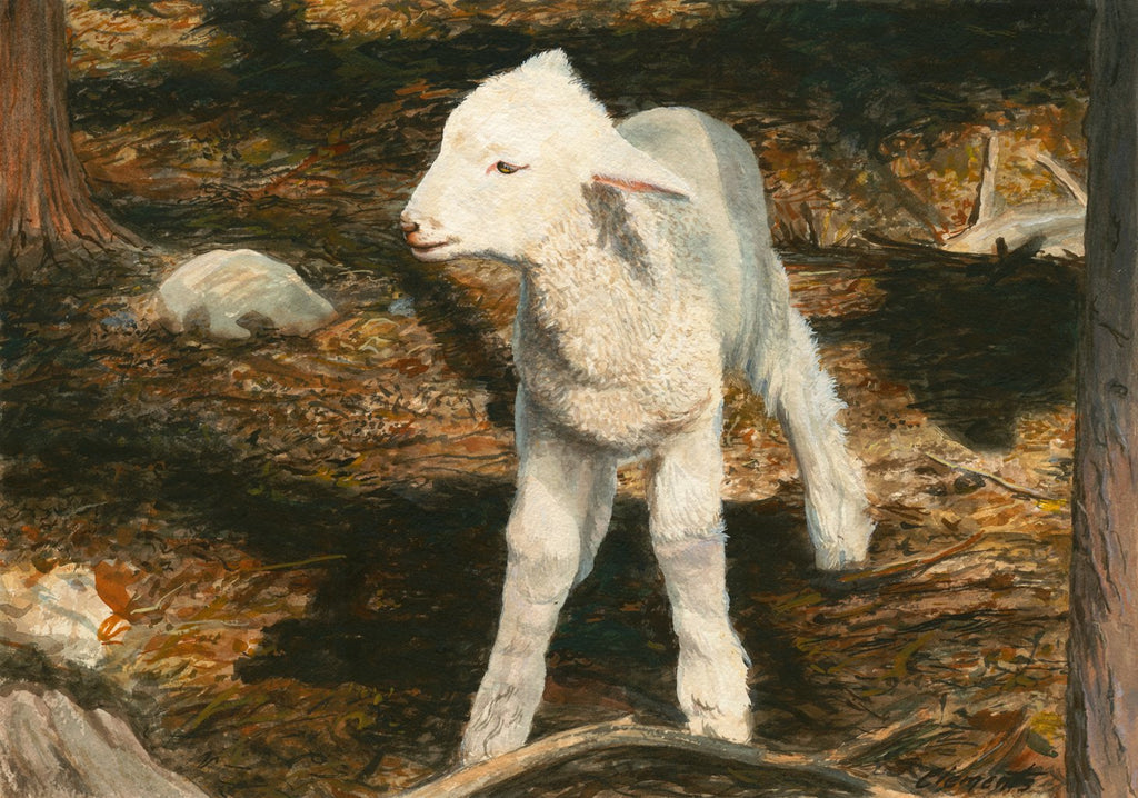 Coopworth Lamb in Shaded Trees Painting Giclée Print