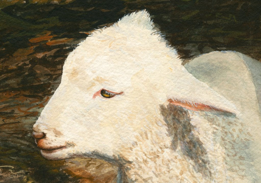 Coopworth Lamb in Shaded Trees Painting Giclée Print Crop 1