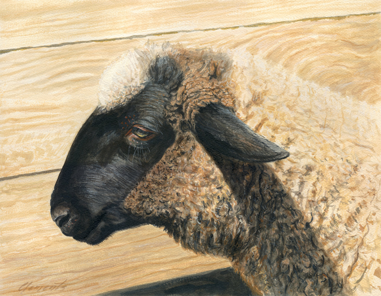 Portrait of Suffolk Ram Sheep Painting Giclée Print