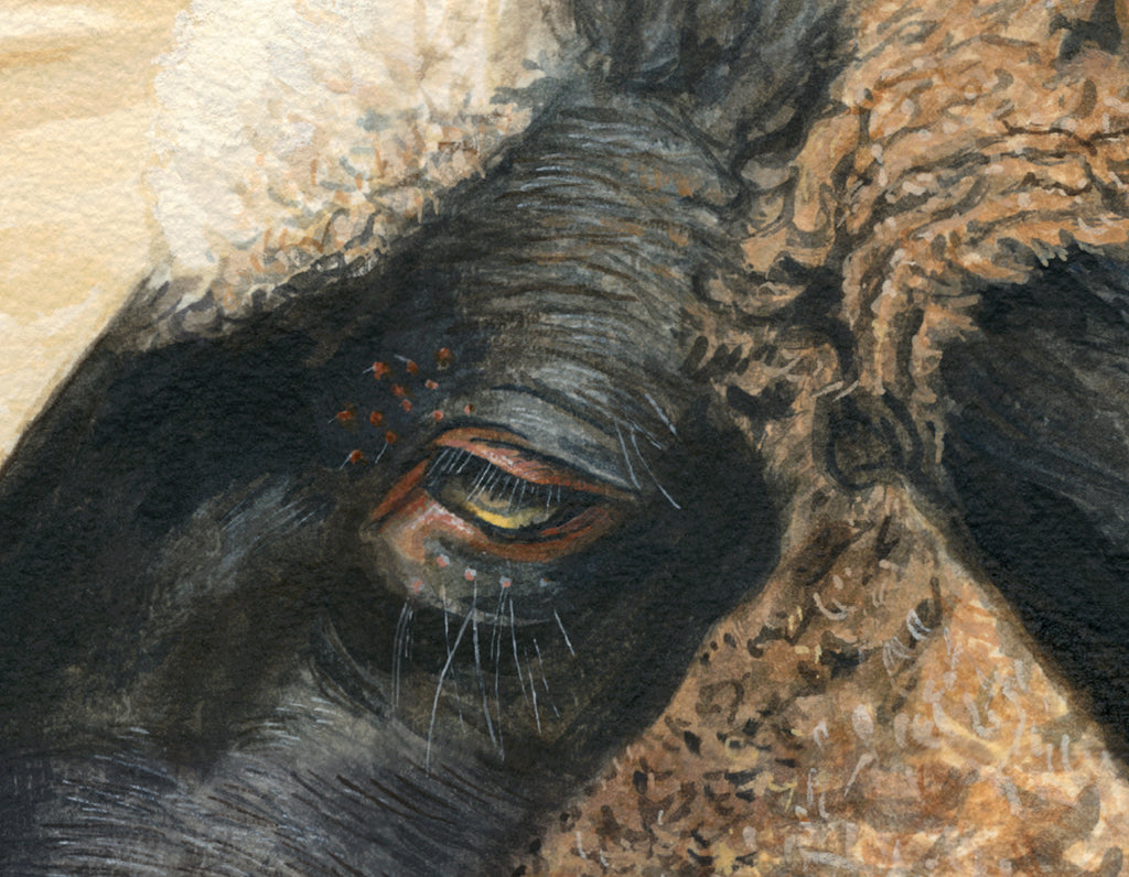 Portrait of Suffolk Ram Sheep Painting Giclée Print Crop 1