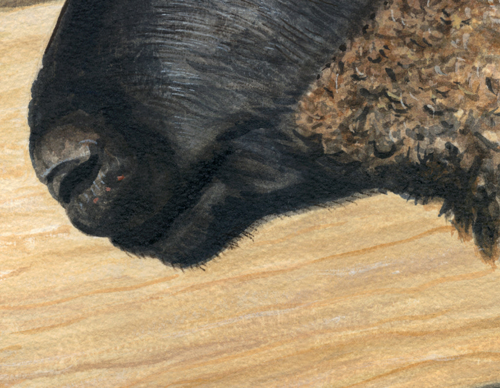 Portrait of Suffolk Ram Sheep Painting Giclée Print Crop 3