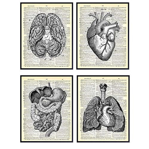 Heart, Lungs, Brain, Intestine Anatomy Organs - Upcycled Dictionary Wall Art Prints for Medical Clinic, Office - 8x10 Vintage Steampunk Goth Decor Set - Gift for Doctor, Nurse, Med School, Student