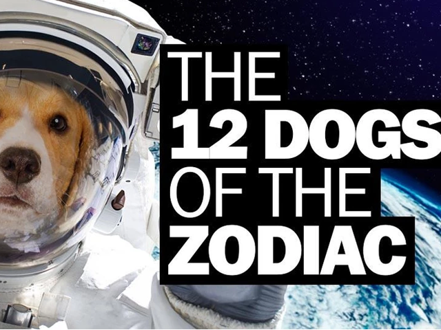 The 12 Dogs Of The Zodiac…