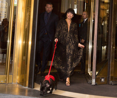 LADY GAGA's DOG MISS ASIA IN HER MOSHIQA BIJOU DOG HARNESS and BISOU DOG LEASH