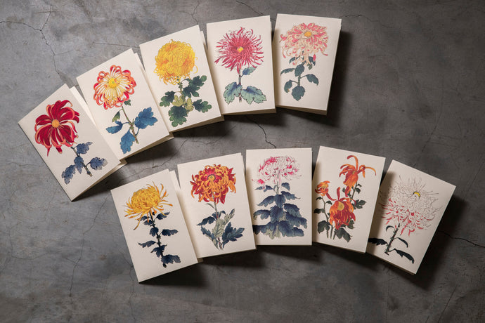 Flower Cards 花卉卡片