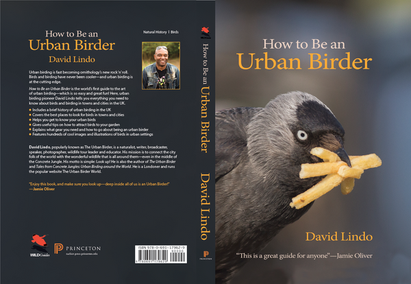How to Be an Urban Birder - By David Lindo