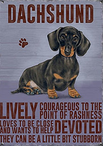 Dachshund (Small)
