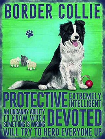 Border Collie (Small)