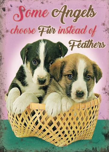 Puppies - Some Angels choose fur instead of feathers (Small)