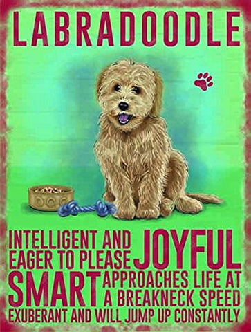 Labradoodle (Small)