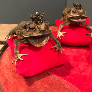 An anthropomorphic taxidermy toad