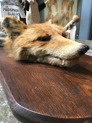 An Allen & Co taxidermy fox head death mask on a wooden shield