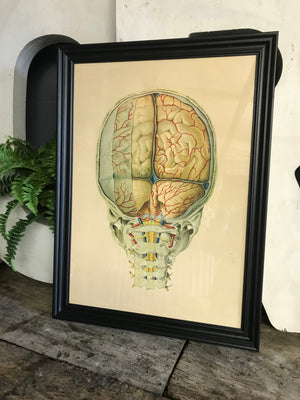 A large Mid-Century anatomical brain poster from Brocades pharmaceutical #2