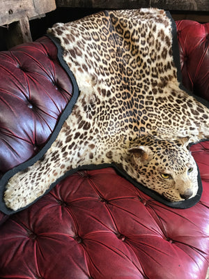 A Victorian taxidermy leopard skin rug with half head