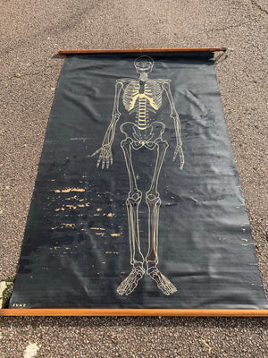 A double sided IVAC anatomical skeleton teaching chart on black background