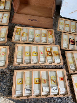 A collection of rare human pathology microscope slides in a bespoke case