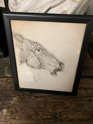An original Renaissance style anatomical pen and ink drawing of a horse