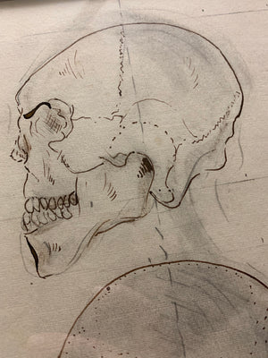 An original Renaissance style anatomical pen and ink drawing of a skull