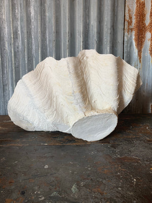 A white plaster Giant Clam Shell sculpture (Tridacna Gigas)