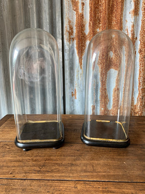 A rare pair of square ebonised glass display domes