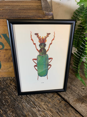 An original beetle bookplate print- Insect interest