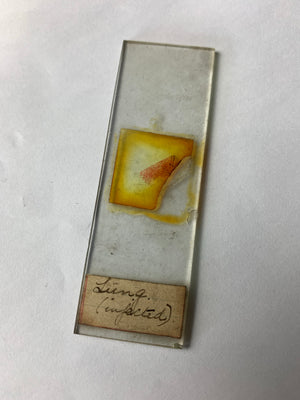 A collection of rare human pathology microscope slides