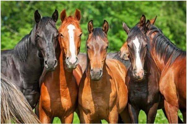 Five happy horses together