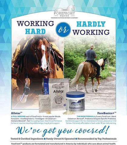 Forefront Allstar or Forefront ForeBasics - Supplements for horses
