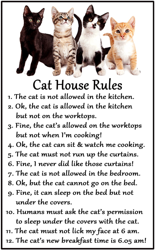 Funny Cat Magnet Cat House Rules Kittycatscollectibles