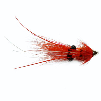 Islamouth Shrimp Feeler Conehead  - 10mm