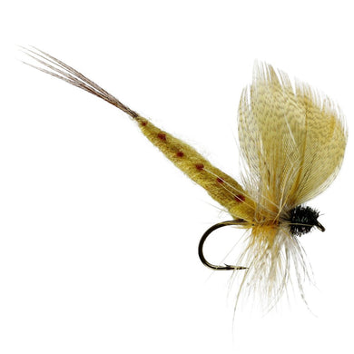 Thomas Yellow Mayfly