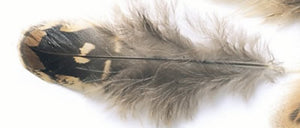 Pheasant Hen Ringneck Shoulder Feathers