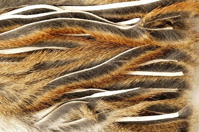 Micro Zonker Pine Squirrel Whole Skin