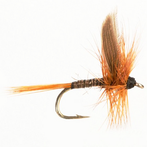Dry Winged Red Quill