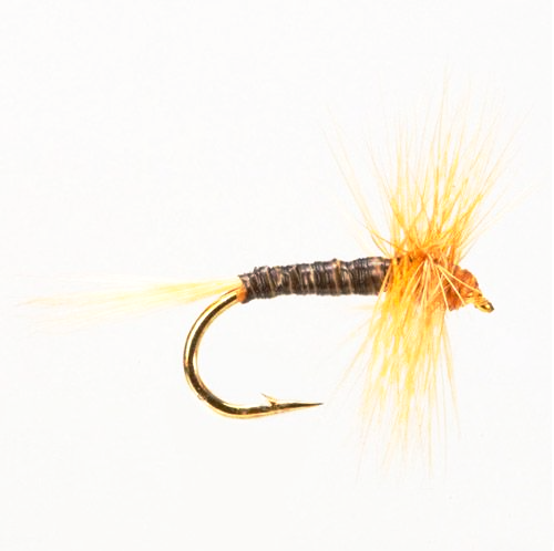 Ginger Quill (Size 14)