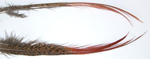 Golden Pheasant Red Spears